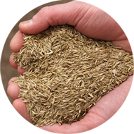 Grass Seed Faqs